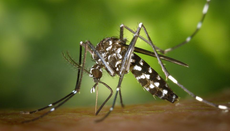 Nach Mücken schlagen kann helfen